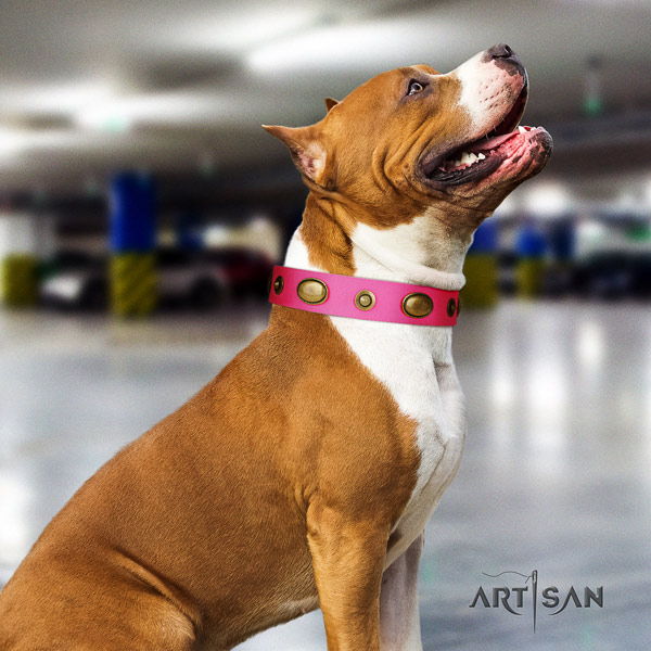 Amstaff stunning genuine leather dog collar with decorations for walking