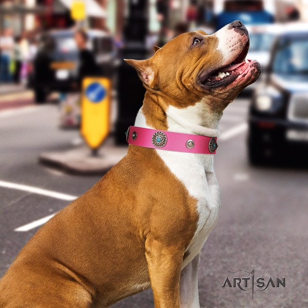 Amstaff handmade leather dog collar for easy wearing