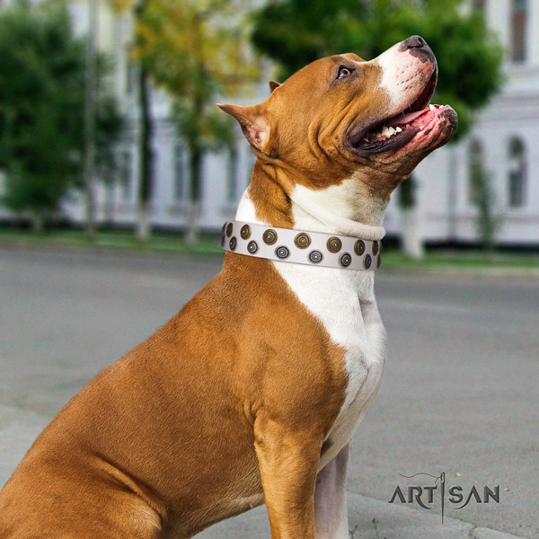 Amstaff awesome genuine leather dog collar with adornments for daily use
