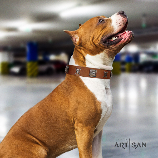Amstaff easy to adjust full grain natural leather dog collar for comfy wearing