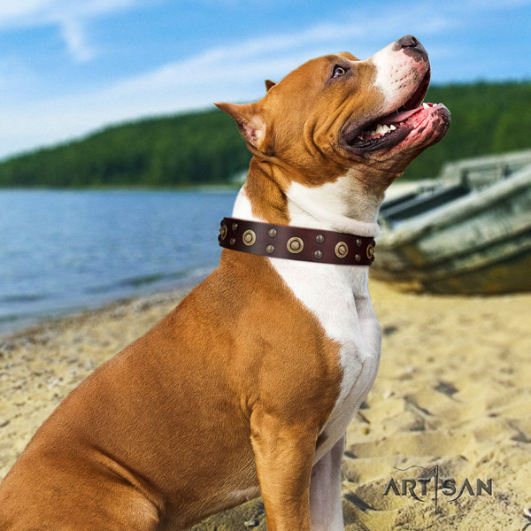 Amstaff exquisite leather dog collar with adornments for everyday use