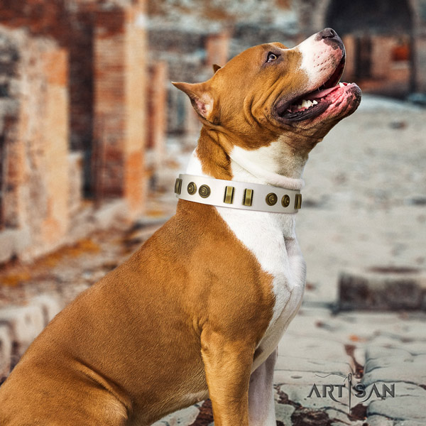 Amstaff remarkable leather dog collar with decorations for everyday use