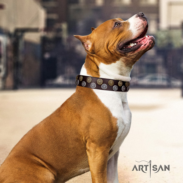 Amstaff unique genuine leather dog collar with decorations for comfortable wearing