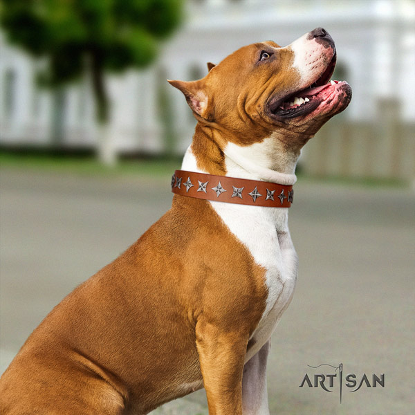 Amstaff unique leather dog collar with decorations for daily use