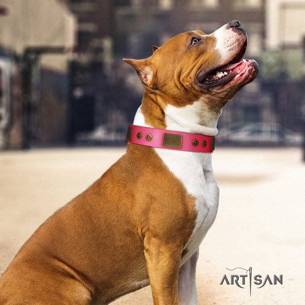 Amstaff exquisite leather dog collar with embellishments for daily use