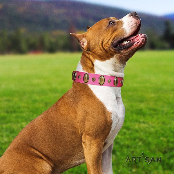 Amstaff designer full grain leather dog collar for comfy wearing