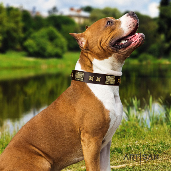 Amstaff designer full grain leather dog collar with studs for stylish walking