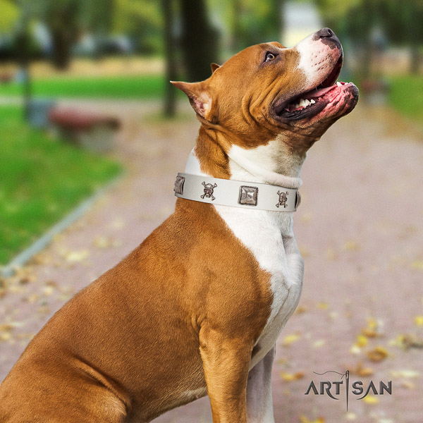 Amstaff unusual natural genuine leather dog collar for fancy walking