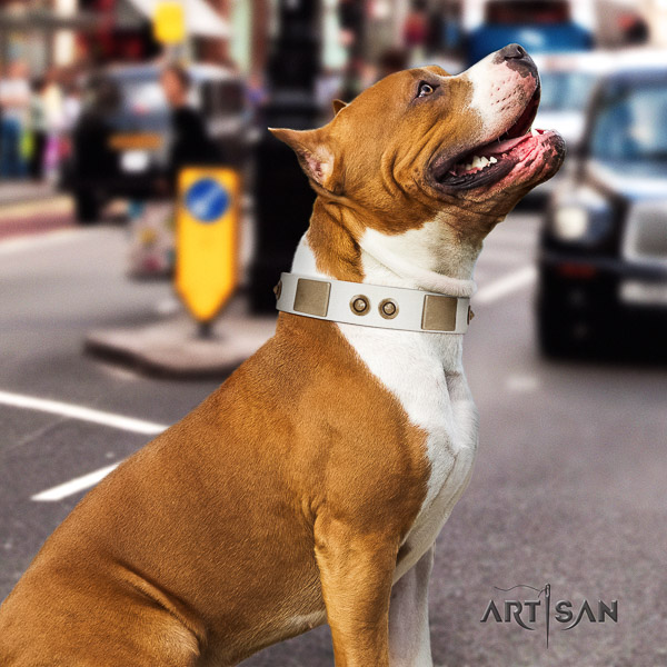 Amstaff extraordinary genuine leather dog collar for daily use