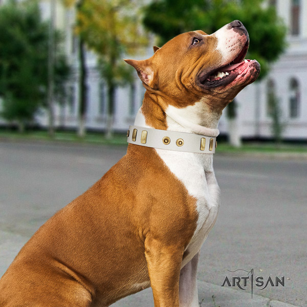 Amstaff adjustable full grain natural leather dog collar for daily use