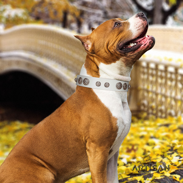 Amstaff exceptional full grain leather dog collar for comfy wearing