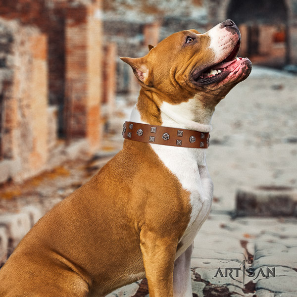 Amstaff top notch full grain natural leather dog collar for daily walking