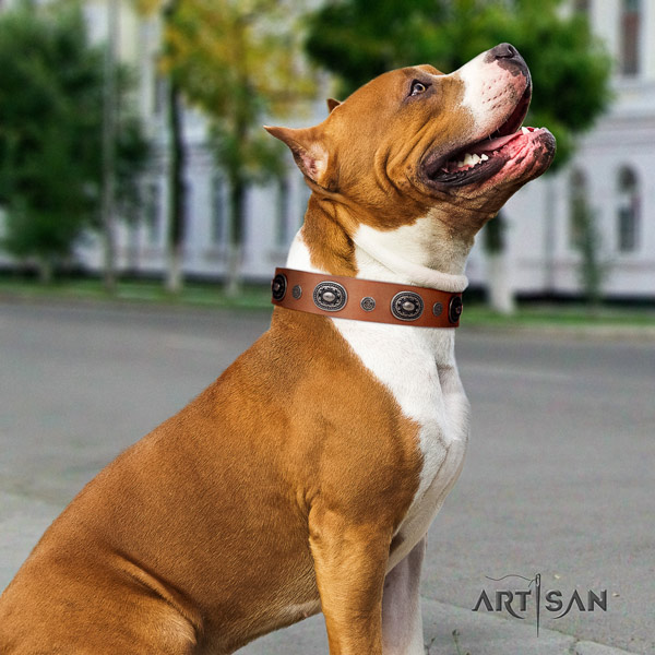 Amstaff fashionable leather dog collar with studs for everyday walking
