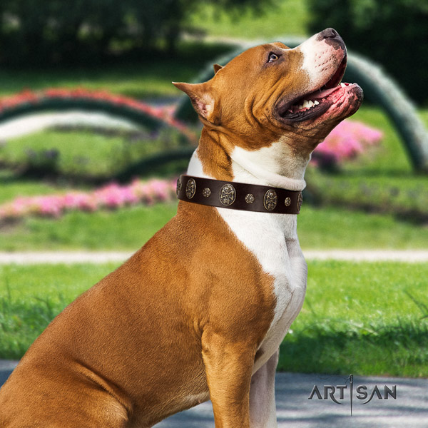 Amstaff convenient natural genuine leather dog collar for comfy wearing