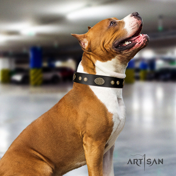 Amstaff fashionable leather dog collar with decorations for handy use