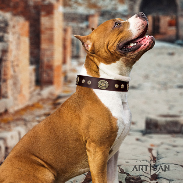 Amstaff unique leather dog collar with embellishments for everyday use