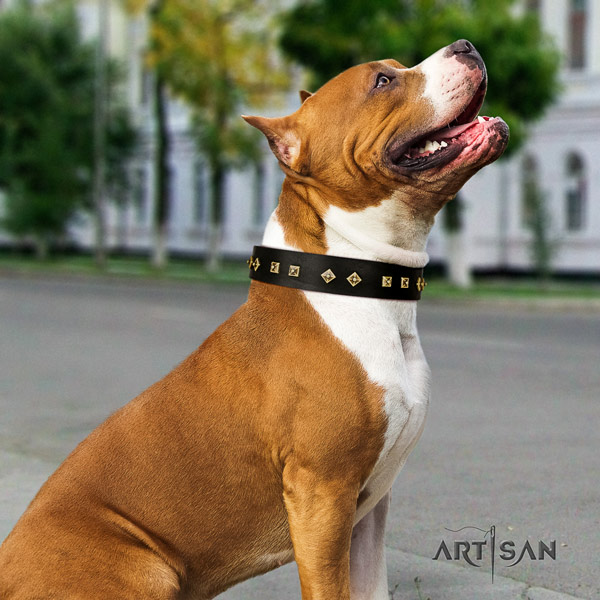 Amstaff stunning genuine leather dog collar with embellishments for fancy walking