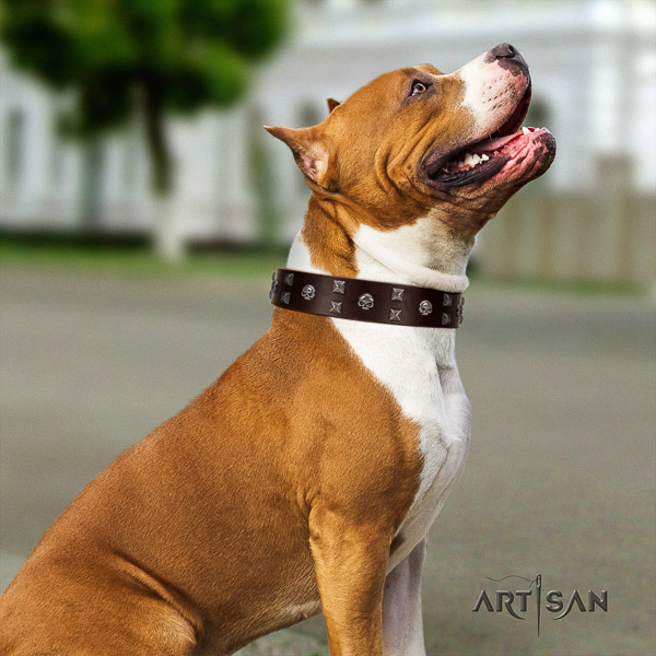 Amstaff best quality full grain genuine leather dog collar for everyday use