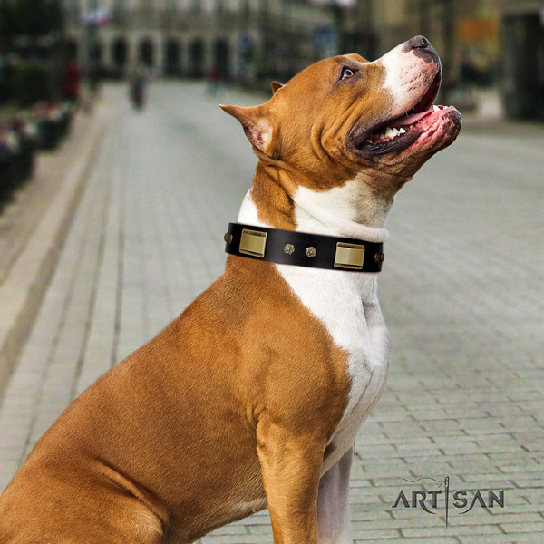 Amstaff fashionable full grain leather dog collar with embellishments for stylish walking