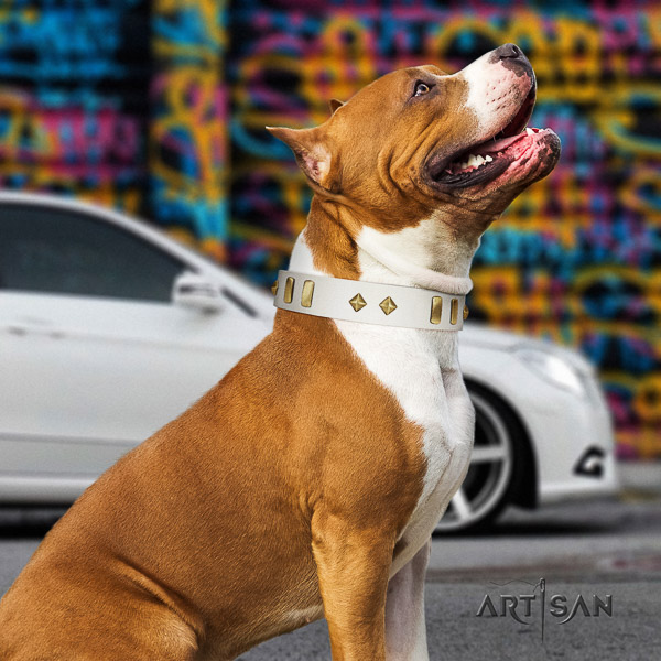 Amstaff easy to adjust natural genuine leather dog collar for comfy wearing