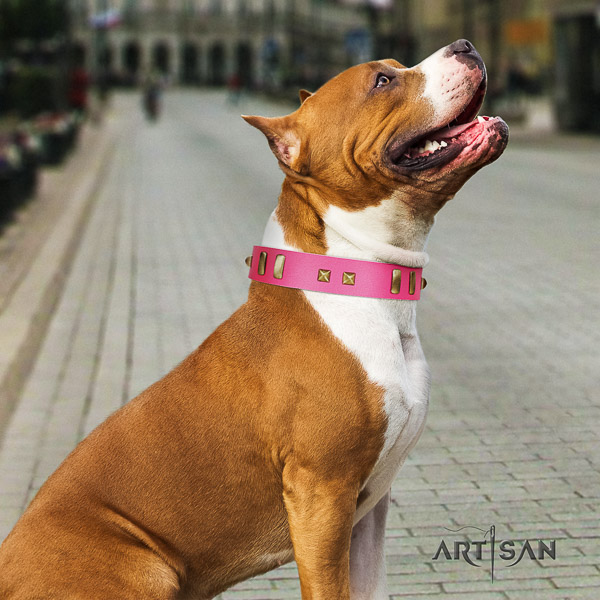 Amstaff adorned full grain genuine leather dog collar for comfy wearing