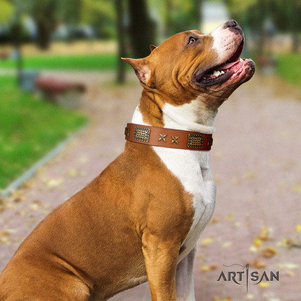 Amstaff amazing full grain leather dog collar with decorations for easy wearing