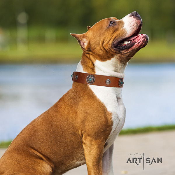 Amstaff top quality full grain leather dog collar for easy wearing