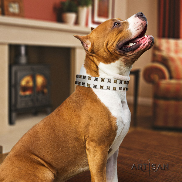 Amstaff fine quality full grain leather dog collar for stylish walking