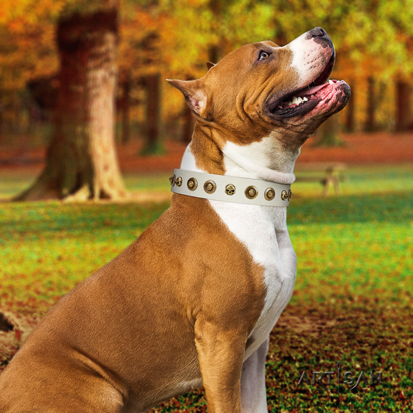 Amstaff easy wearing full grain genuine leather dog collar for fancy walking