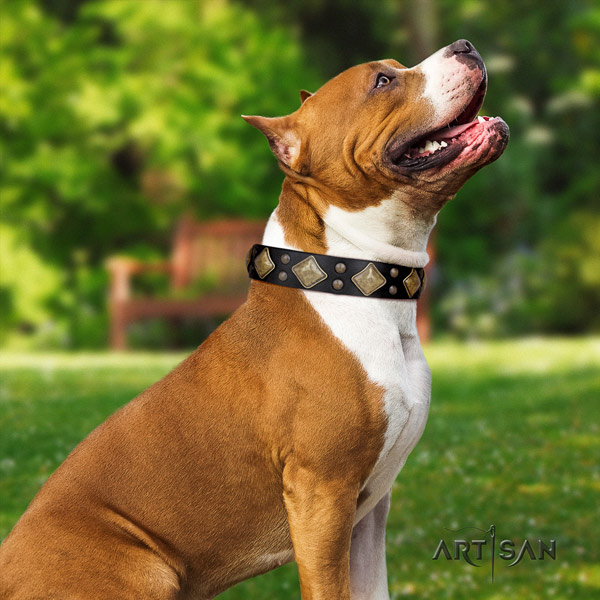 Amstaff remarkable full grain leather dog collar with embellishments for comfortable wearing