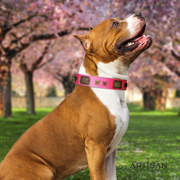 Amstaff amazing full grain leather dog collar with studs for comfortable wearing