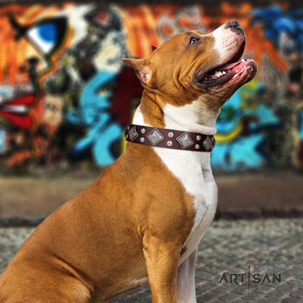 Amstaff unique full grain leather dog collar with embellishments for basic training