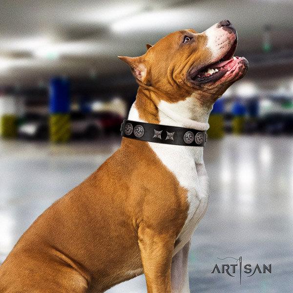 Amstaff easy wearing natural genuine leather dog collar for handy use