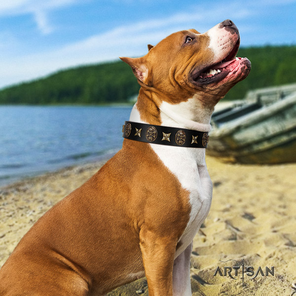 Amstaff adorned natural genuine leather dog collar for handy use