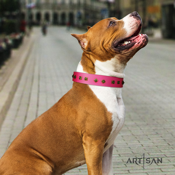 Amstaff unique leather dog collar with studs for comfortable wearing