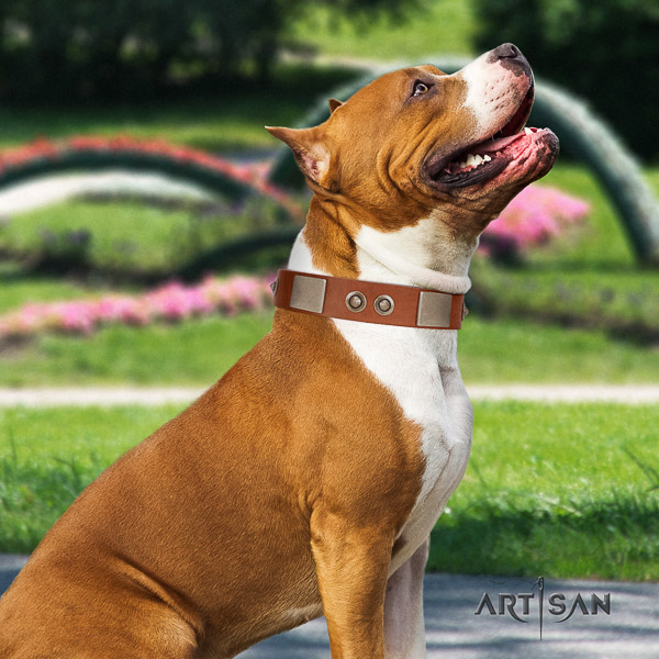 Amstaff easy to adjust full grain natural leather dog collar for comfortable wearing