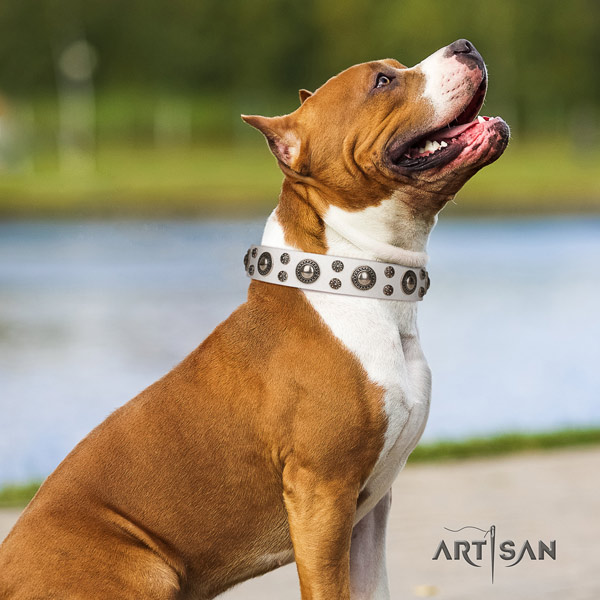 Amstaff unique genuine leather dog collar with studs for stylish walking