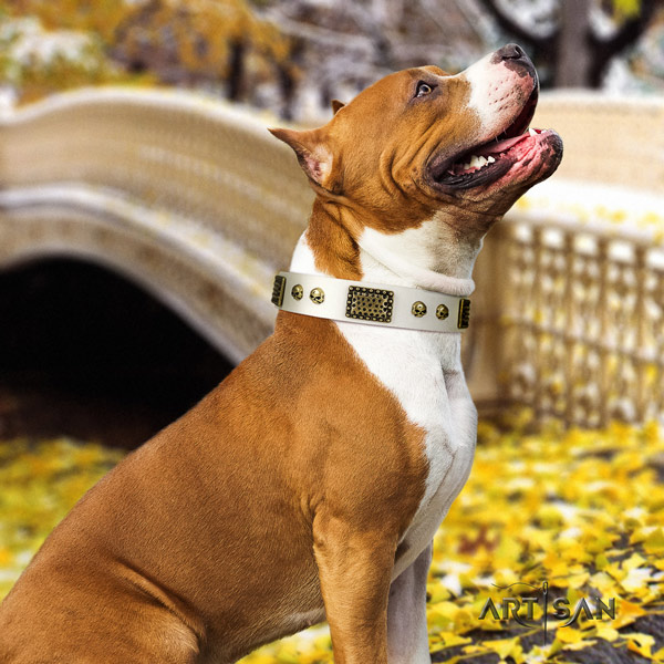 Amstaff unusual full grain leather dog collar with adornments for handy use