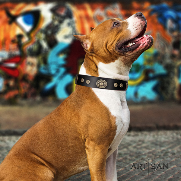 Amstaff extraordinary leather dog collar with adornments for comfortable wearing