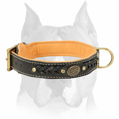 Exclusive design leather Amstaff dog collar
