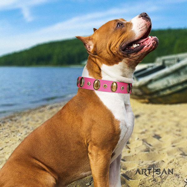 Amstaff easy adjustable genuine leather dog collar for comfy wearing