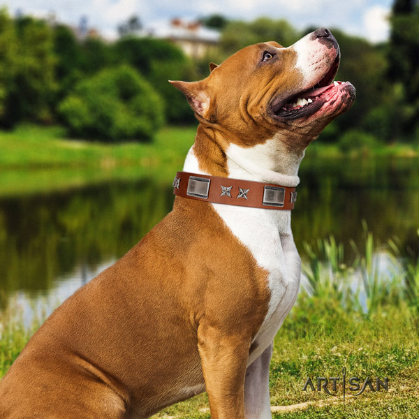 Amstaff remarkable full grain leather dog collar with studs for daily use