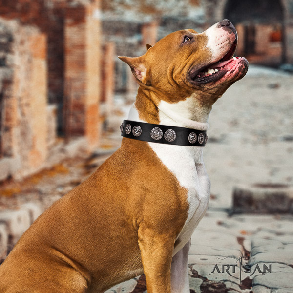 Amstaff easy wearing full grain leather dog collar for comfy wearing