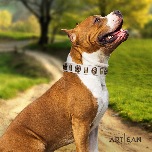 Amstaff unique leather dog collar for basic training