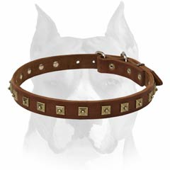 Exclusive leather Amstaff dog collar for walking