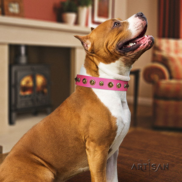 Amstaff top notch full grain genuine leather dog collar for stylish walking