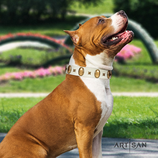 Amstaff unusual full grain genuine leather dog collar for comfy wearing