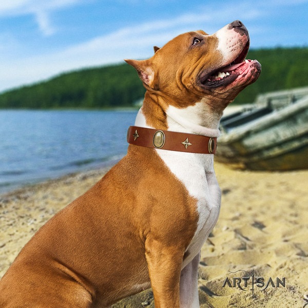 Amstaff best quality full grain leather dog collar for handy use