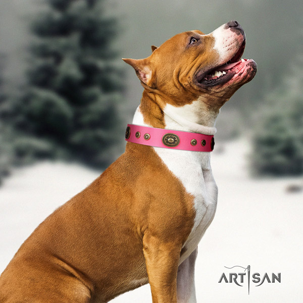 Amstaff stylish leather dog collar with studs for comfy wearing