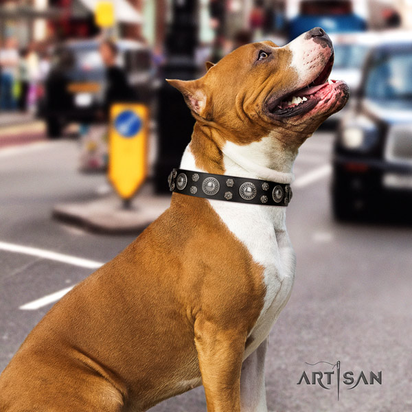 Amstaff exquisite full grain leather dog collar with decorations for comfy wearing